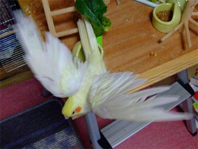 piro20080622-1.jpg