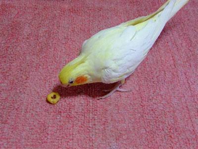 piro20080624-2.jpg