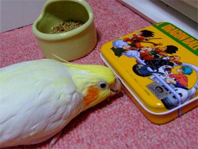 piro20080627-5.jpg