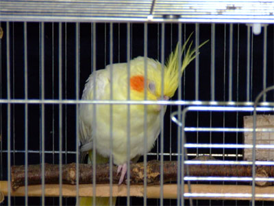 piro20080628-7.jpg