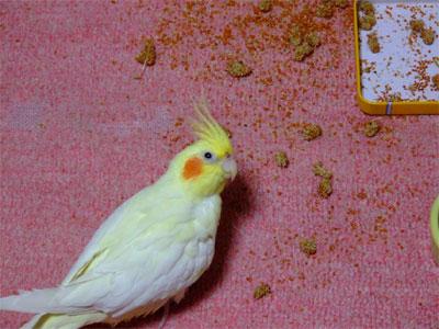 piro20080630-10.jpg