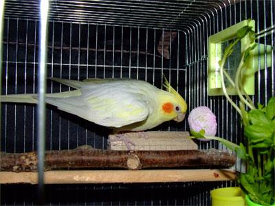 piro20080630-4.jpg