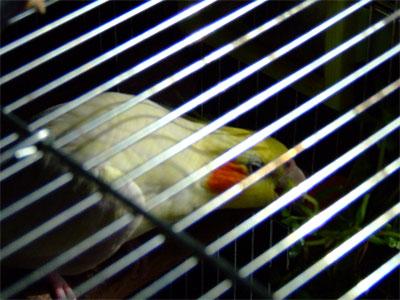 piro20080725-1.jpg