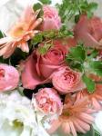 080628_rose