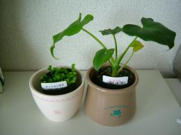Seria 観葉植物1