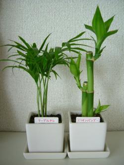 Seria 観葉植物2