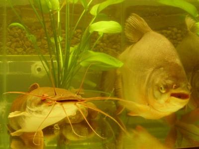 もらった魚2