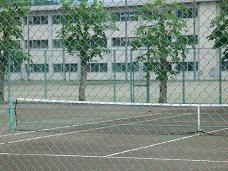 犬が走るテニスコート