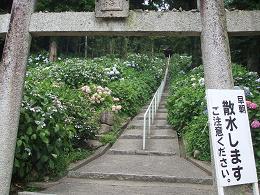 07-08 あじさい参道