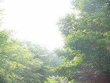 07-17 夏の日射し