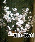 20080401170309
