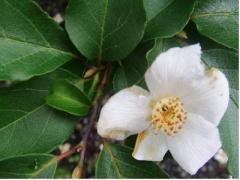 庭の木の花