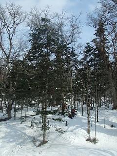 冬の森林ウォーキング001