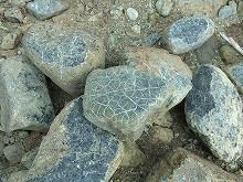 080529蛇紋岩コレクション