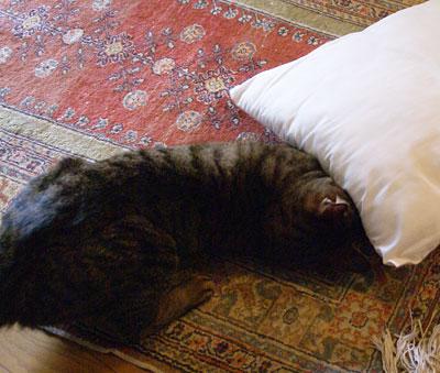 マロンと枕1