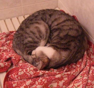 where to sleep?3