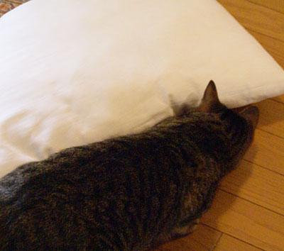 マロンと枕2