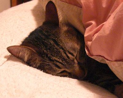where to sleep?4