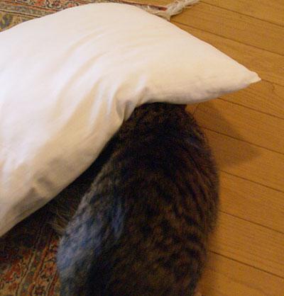 マロンと枕3
