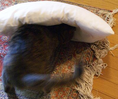 マロンと枕5
