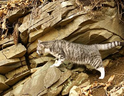登りたいナナ5
