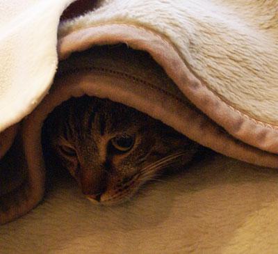 お客様用毛布3