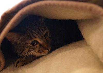 お客様用毛布4
