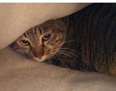 お客様用毛布5