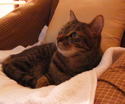 安楽椅子とマロン4