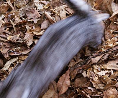 落ち葉の山6