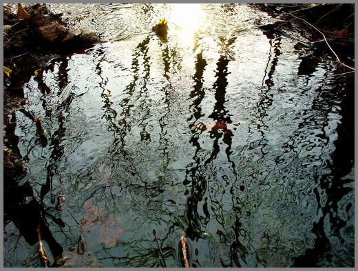 春の小川の光と影