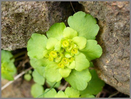 岩の裂け目から出る花