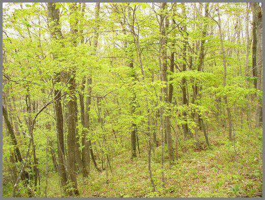 新緑の林内