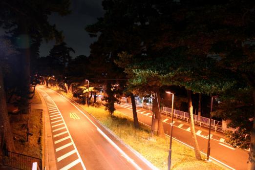 夜の松並木