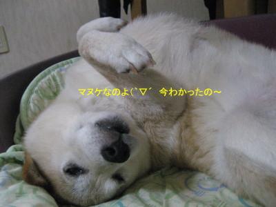 マヌケ2_1