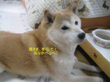 ぺこぺこ_1