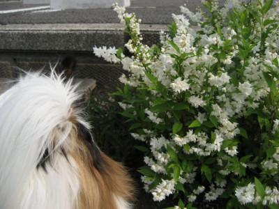 お尻とお花