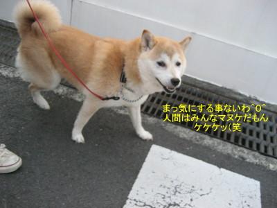 ケケケッ_1