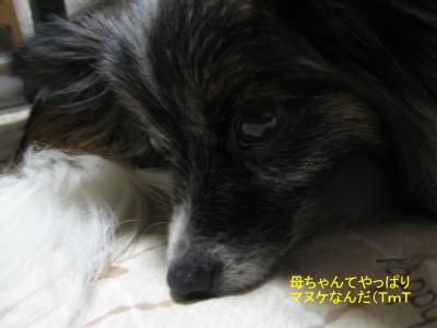 マヌケ_3