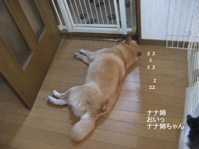 ナナ姉ちゃん_1