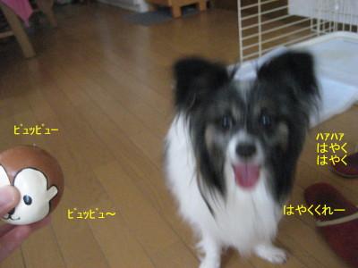 ぴゅっぴゅ_1