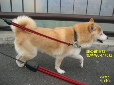 朝の散歩_1
