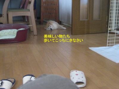 あるいて_1
