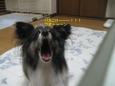 ばかこけ_1