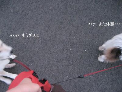 きゅうけお_1