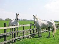 horsedairies1