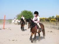 horsedairies4