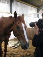 horsedairies2