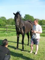 horsedairies3