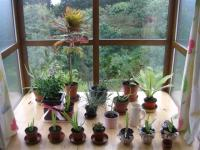 plantshome